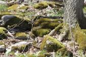 Muschio che copre grandi rocce in una zona boschiva