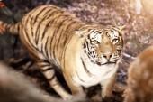 Fotografie Výstava divoká zvířata