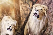 Fotografie Wild animals exhibition
