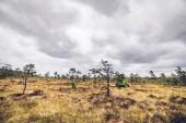 Wilderness krajina s malým borovic v prérii podívat pod šedou oblohou