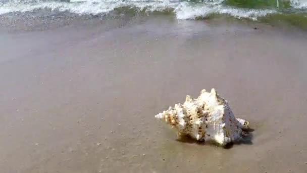 Riesiger Frosch Shell am Strand