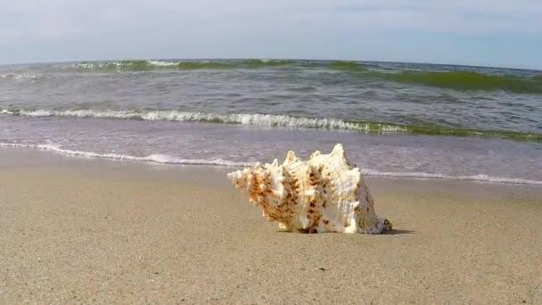 Óriás béka gránát egy strand