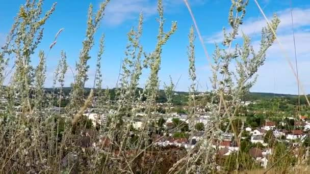 Absinth, Kräuter in Deutschland mit Hintergrund der Stadt Heidenheim