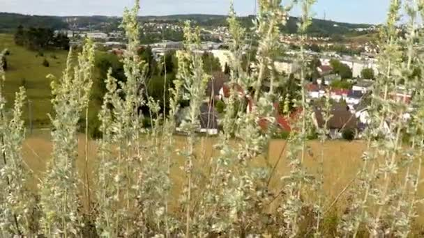 absinthe, kräuter in deutschland mit heidenheimer hintergrund