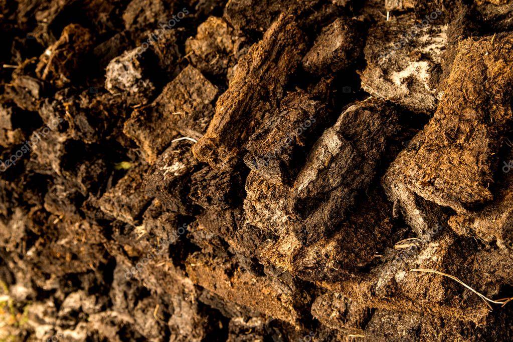 peat, closeup of a stock