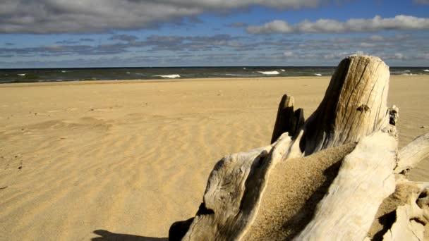Treibholz an einem Ostseestrand mit starker Brandung