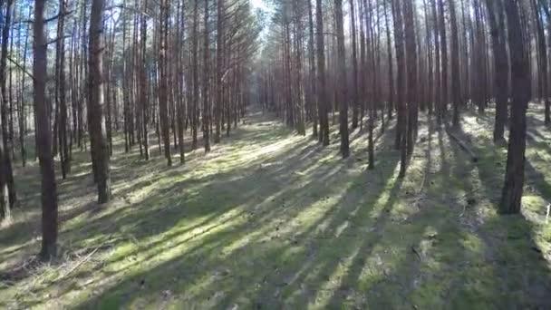 procházky po skotském borovicovém lese nedaleko pobřeží Baltského moře