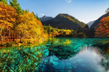 Fantastic view of the Five Flower Lake (Multicolored Lake) among fall woods in Jiuzhaigou nature reserve (Jiuzhai Valley National Park), China. Submerged tree trunks are visible in azure water. stock vector