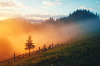 Mountain valley during sunrise. Amazing nature scene glowing by sunlight. Located place: Carpathians, Ukraine, Europe stock vector