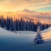 Fotografie Dramatische winterliche Szene mit schneebedeckten Bäumen