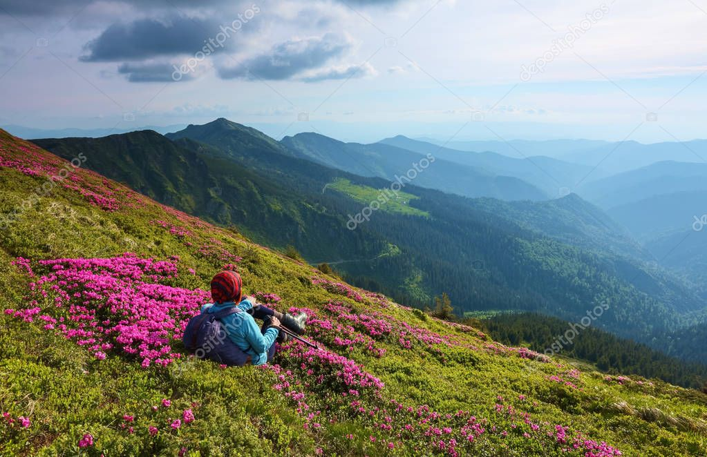 The tourist girl with back sack and tracking sticks sits on the lawn of rhododendron. Relaxation. Mountain landscapes. Wonderful summer day. Location the Carpathian Mountains, Marmarosy, Ukraine.