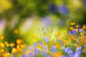 Early spring wildflowers on the background of bokeh green grass. Majestic nature wallpaper with garden. Floral springtime. Free space for text. Sunny day.