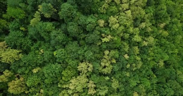 Letecký pohled shora letní zelené stromy v lese na pozadí, Kavkaz, Rusko. DRONY fotografie. Jehličnaté a listnaté stromy, lesní cesta. Krásné panoramatické fotografie nad vrcholky borovic.