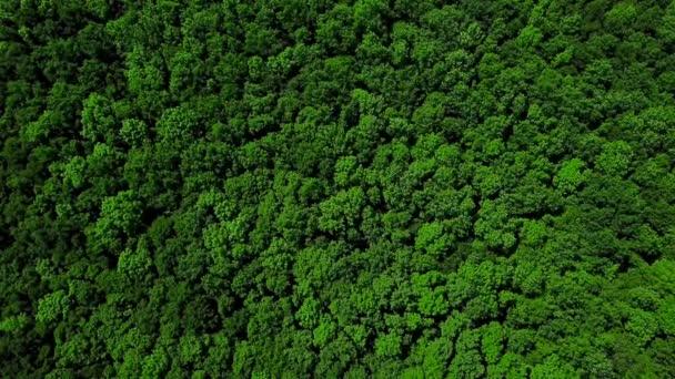 Pohled na DRONY oka-4k vzdušná, pozadí stromů, Kavkaz, Rusko.