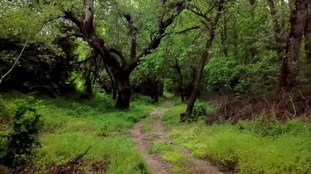 Tajemný les říše divů - pohybující se mezi stromy v zeleném lese