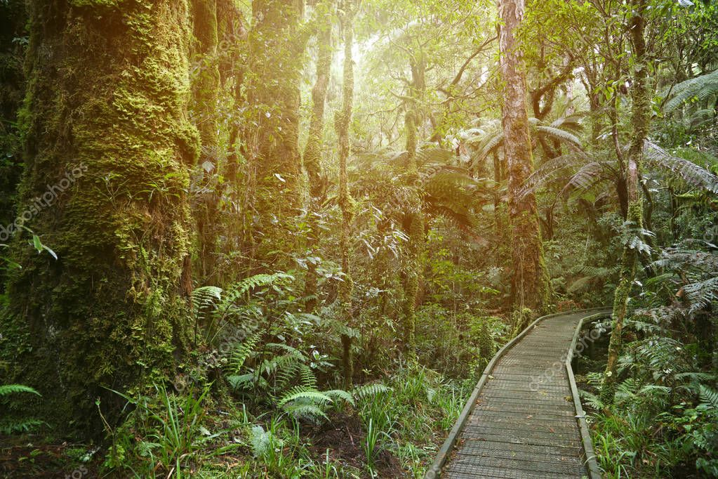 Boardwalk in lush tropical forest