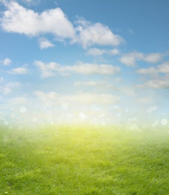 Green meadow and blue sky spring backgroun