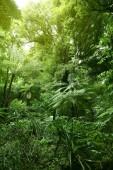 fogliame verde lussureggiante giungla tropicale