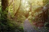 Forest walking trail