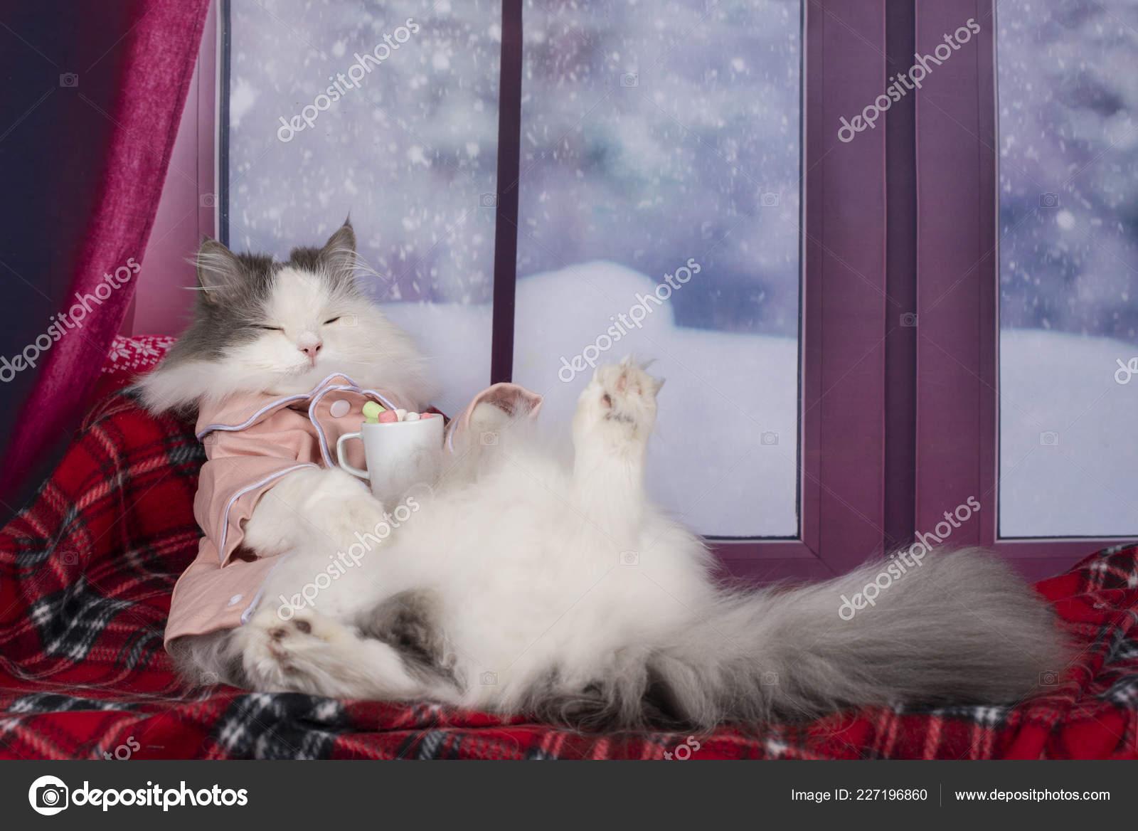 cerca ufficiale spedizioni mondiali gratuite estremamente unico Gatto Pigiama Bere Cioccolata Calda Con Marshmallow — Foto ...