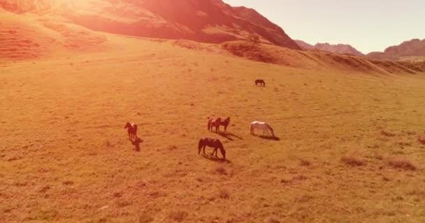 Let nad divoké koně stádo na louce. Jaro hory divoké přírody. Koncept svobody ekologie