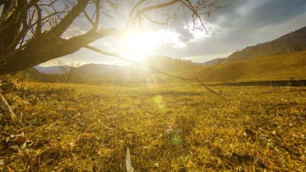 Zeitraffer der Tod Baum und gelbe Trockenrasen mountian Landschaft mit Wolken und Sonnenstrahlen. Horizontale Schiebereglerbewegung