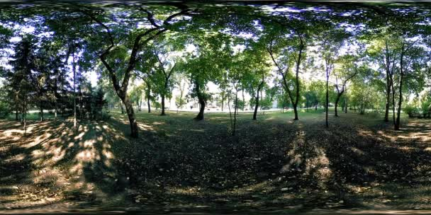 UHD 4K 360 VR Virtual Reality of a city park recreation area. Trees and green grass at autumn or summer day