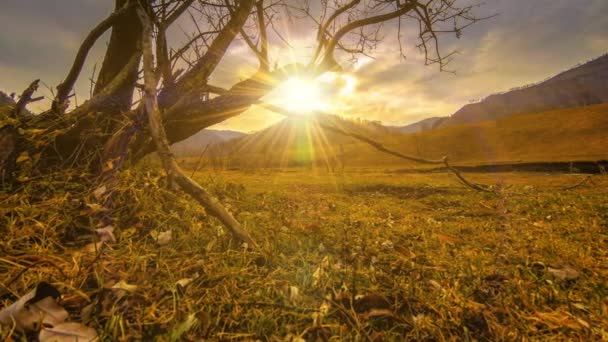 4 k Uhd idő telik el a halál fa és az aszály katasztrófa, száraz sárga fű és talaj: alvás tájat a felhők és a nap sugarai. Éghajlatváltozás, globális felmelegedés és az ökológia probléma koncepció. Vízszintes