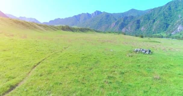 Let nad divoké koně stádo na louce. Jaro hory divoké přírody. Koncept svobody ekologie.