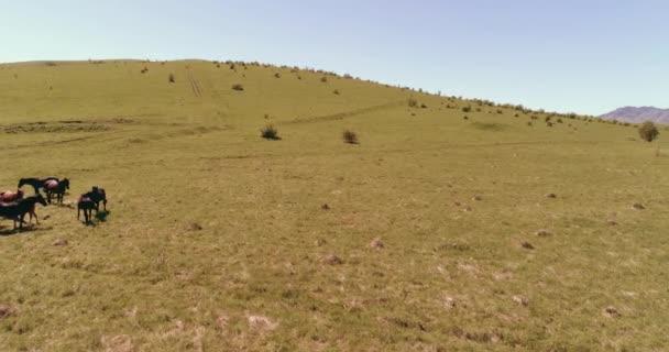 Repülés alatt vad lovak állomány a hegyi rétek. Nyári hegyek vad természet. Szabadság ökológia fogalma.