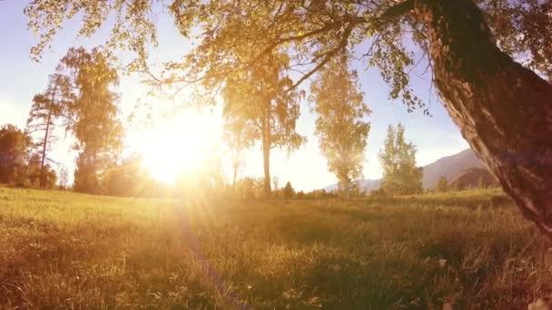 Sluneční louka venkova v horské krajině s zelenou trávou, stromy a sluneční paprsky. Diagonální pohyb na motorizovaný slider dolly.