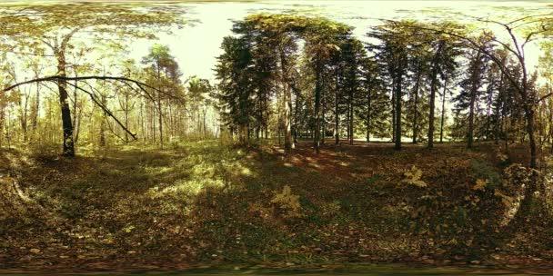 UHD 4K 360 VR Virtuální realita rekreační oblasti městského parku. Stromy a zelená tráva na podzim nebo v létě