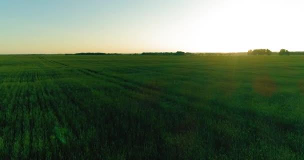Alacsony tengerszint feletti magasság repülés a vidéki nyári területen végtelen sárga táj nyáron napsütéses este. Napsugarak horizonton.