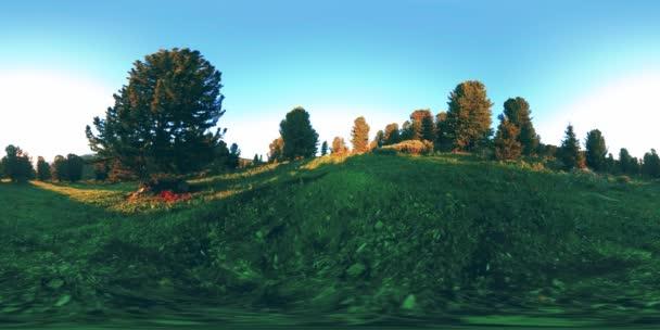 UHD 4K 360 VR időeltolódás a zöld hegyi erdőben. Napsugarak és árnyékok, fű és fenyőfák.
