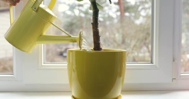 zalévání peníze tree - obchodní investice a růst koncepce