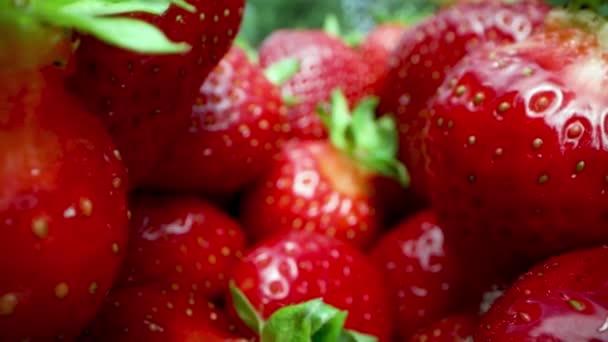detailní záběr čerstvých zralých jahod. Dolly shot