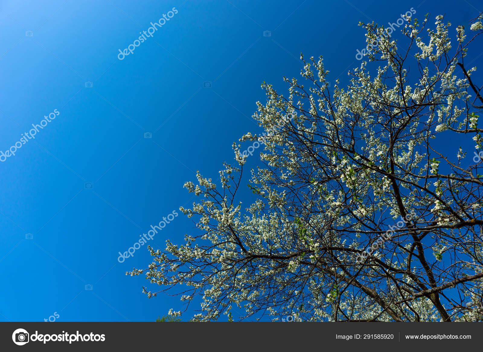 Beauty Of Nature Floral Desktop Background Blooming Closeup Tre