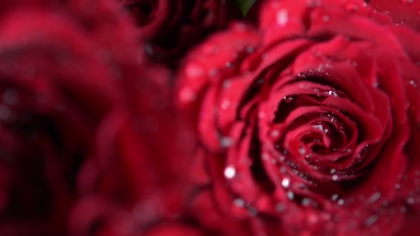 Bunch of Red roses, close up