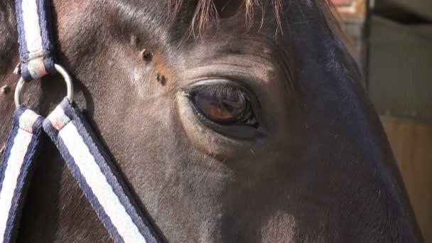 egy ló közelsége