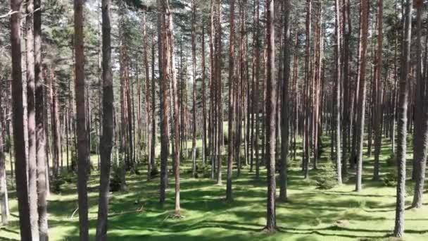 Létání uvnitř lesa