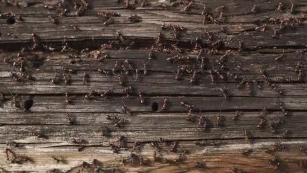 Mravenčí hnízdo v lese-oheň se plazí na dřevěném starém domě