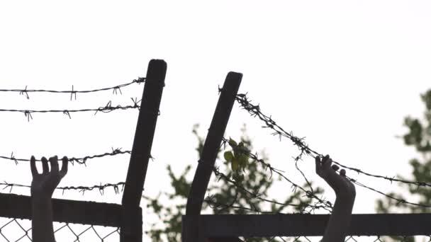 Ženský ruce drží a chytají - ostnatý drátěný plot ve večerní zlaté hodině západu slunce - znamení nebezpečí klec a žádná svoboda