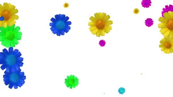 generované animace barevných květin na bílém pozadí. Květiny, změna velikosti.