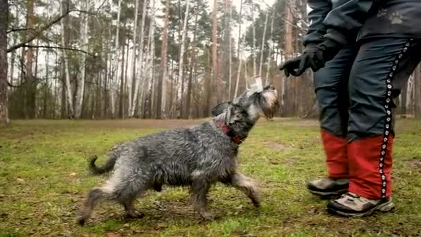Eine ältere Frau trainiert einen Hund im Park. der Hund trägt einen Gegenstand auf der Nase.