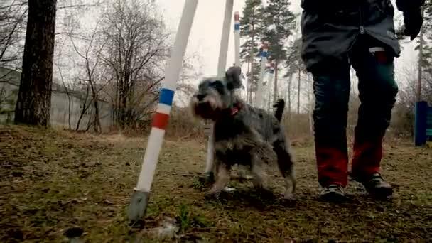 Eine ältere Frau trainiert im Park einen Hund. Der Hund läuft fröhlich zwischen den Stangen.