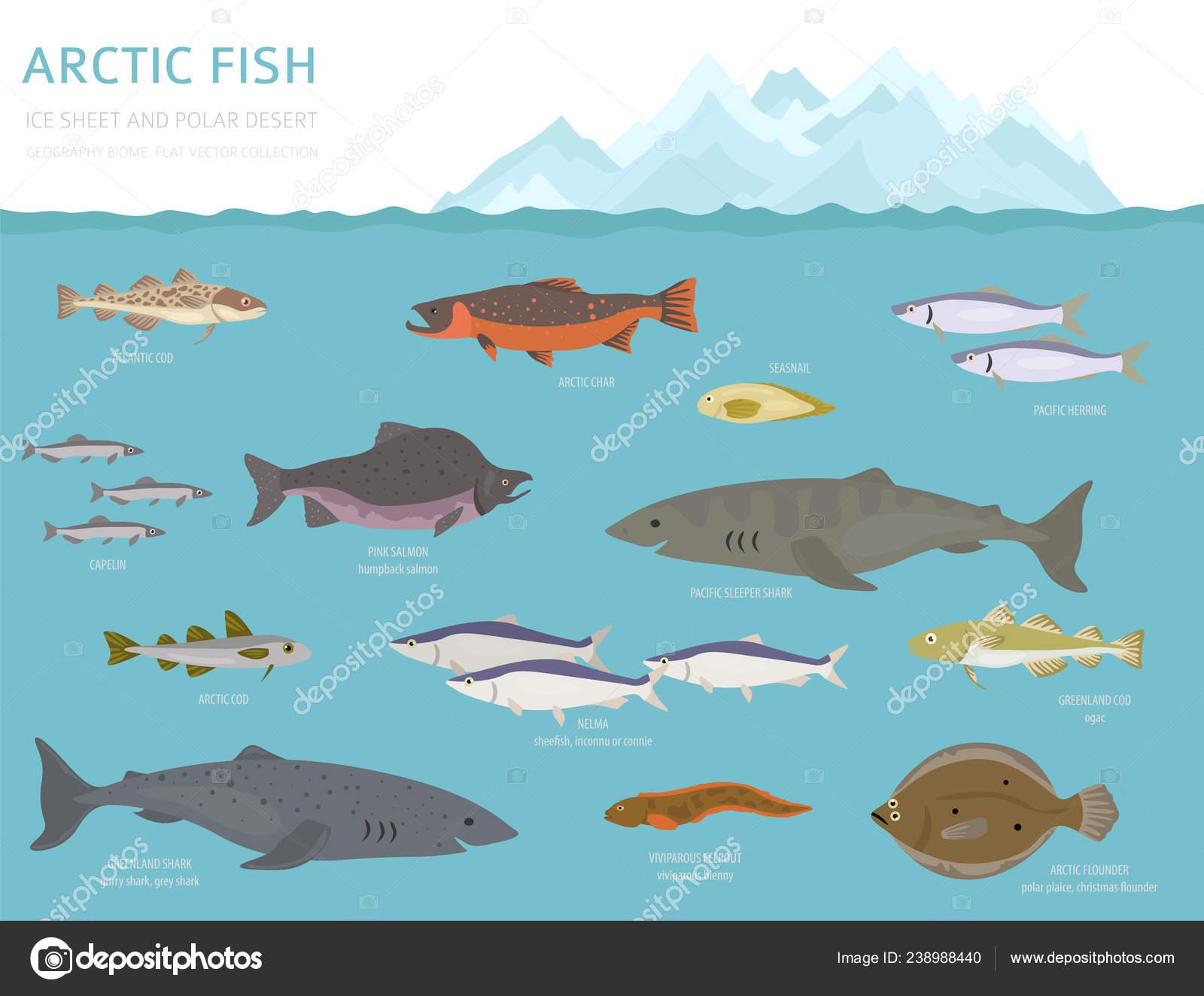 Ice Sheet Polar Desert Biome Terrestrial Ecosystem World Map ...