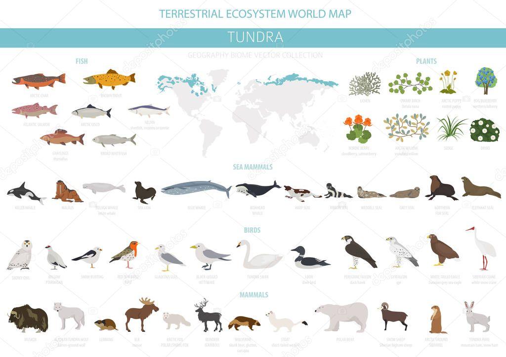 Tundra biome. Terrestrial ecosystem world map. Arctic animals, birds, fish and plants infographic design. Vector illustration