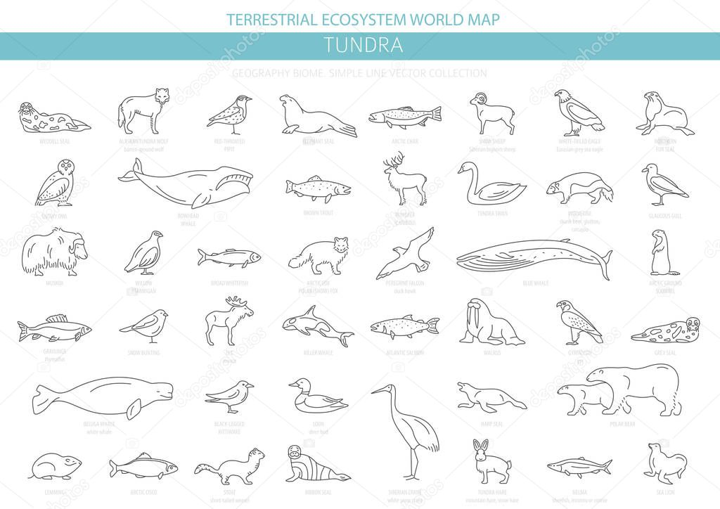 Tundra biome. Simple line style. Terrestrial ecosystem world map. Arctic animals, birds, fish and plants infographic design. Vector illustration