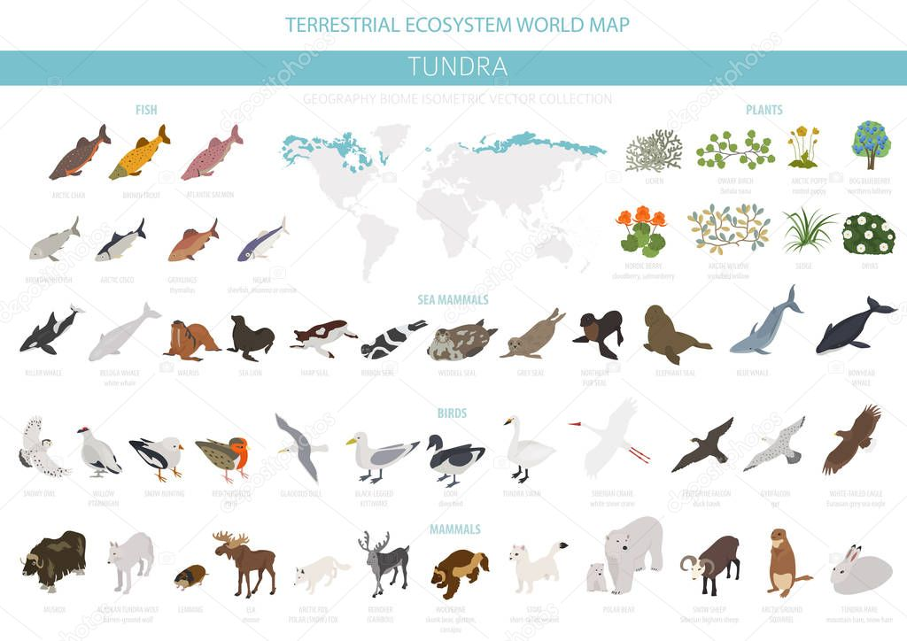 Tundra biome. Isometric 3d style. Terrestrial ecosystem world map. Arctic animals, birds, fish and plants infographic design. Vector illustration