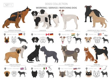 Working, service and watching dogs collection isolated on white.